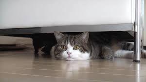 """Résultat de recherche d'images pour """"chats mignons et drôles"""""""