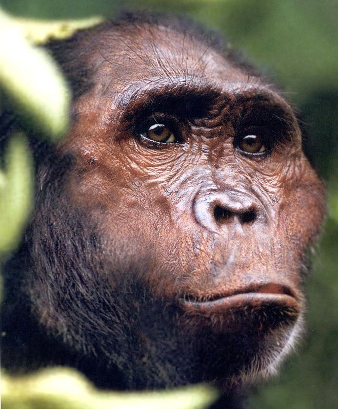 Australopithecus garhi: especie de homínido con rasgos distintos de los típicamente vistos en Australopithecus afarensis y en Australopithecus africanus.