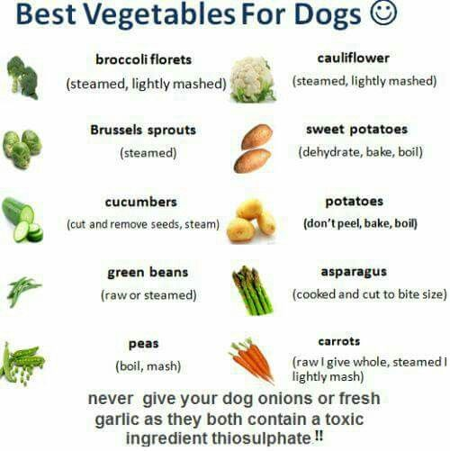 What Is The Best Fiber To Feed Old Dogs