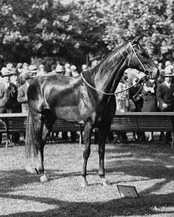 Phar Lap (1926 - 1932) is an Australian legend. He was the winner of Australia's Melbourne Cup in 1930, that country's equivalent of the Kentucky Derby. Phar Lap raced during the depression and won the hearts of a nation he ran in. Phar Lap was a national hero and died only 2 years later in Menloo Park, California under very suspicious circumstances. It was long thought that organized crime played a major part in his death