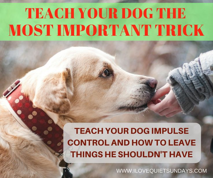 "Teach your dog to ""leave it"" - thorough and reliable training tuesday post by I love quiet sundays. #dogtraining"
