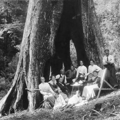 Afternoon tea in a giant tree, Australia 1900s.