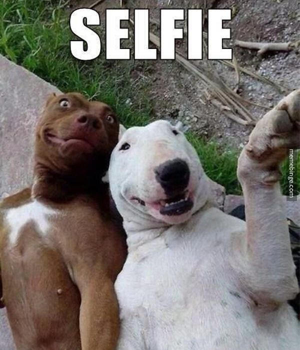 Woah, I wasn't ready. Let's take another! Dog Self Portrait #Humor