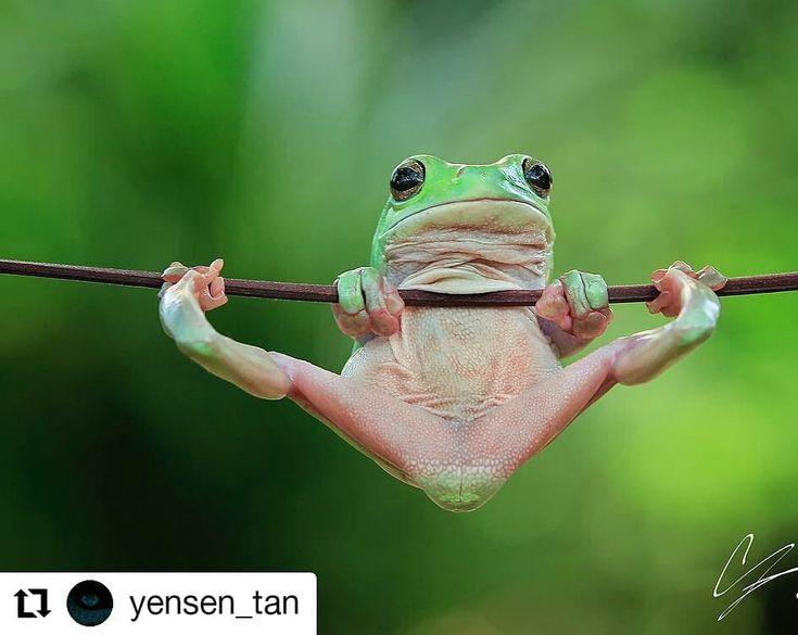 Arrancamos Sabado A Pleno Greengarden Paisajismo Repost Yensen Tan Gymnastics Frog Re Upload One Of My Favo Cute Frogs Cute Animals Green Tree Frog
