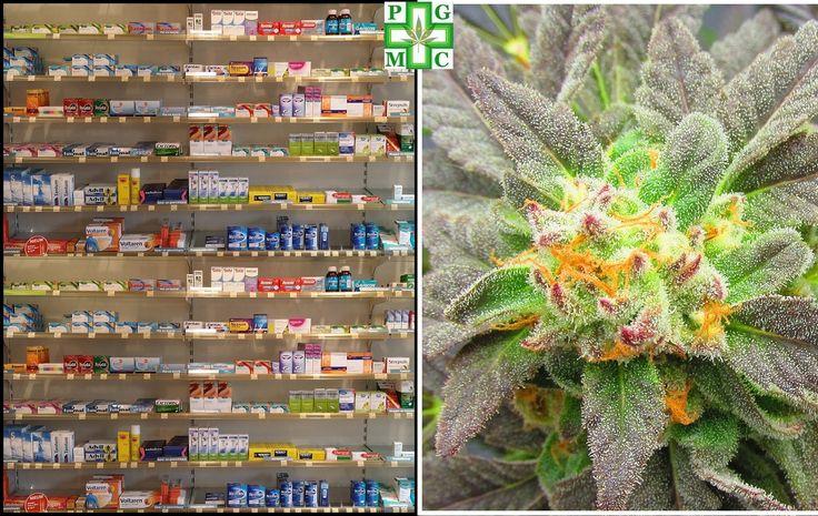 Tips voor bij de dokter om medicinale cannabis op recept te krijgen (pgmcg.nl) | Medical Cannabis Supplies