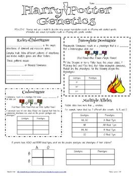 genetics worksheets middle school the best and most genetics best free printable worksheets. Black Bedroom Furniture Sets. Home Design Ideas