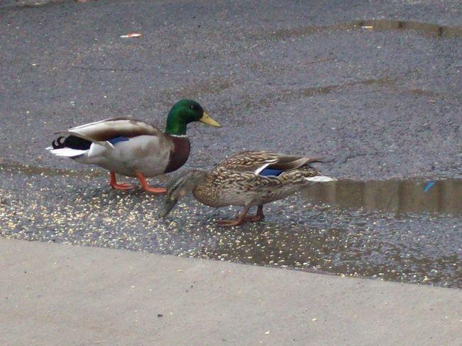 Donald & Daisey