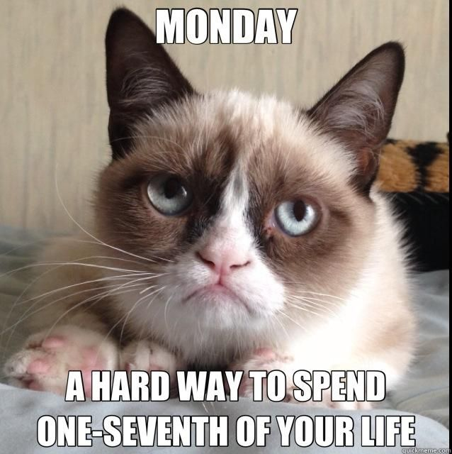 grumpy cat monday - Google Search