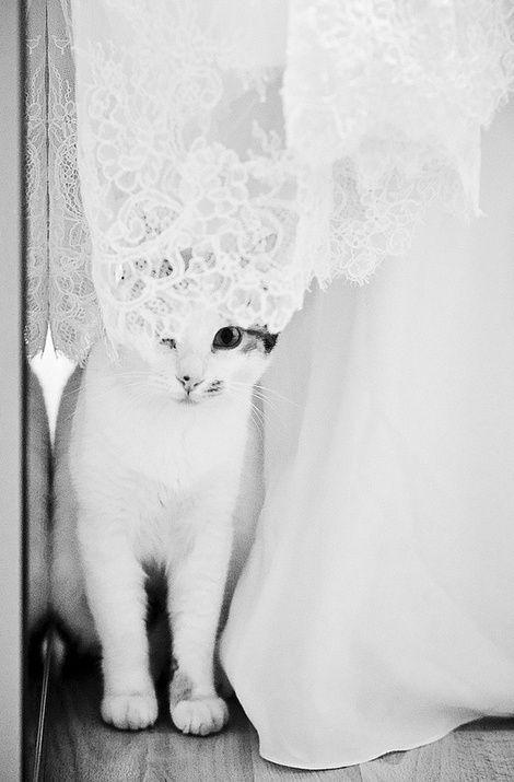 white white cat #cats