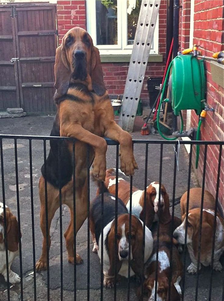 Look at all the hounds!