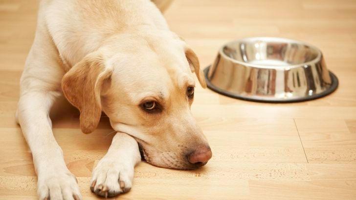 Hundefutter Bei Stiftung Warentest Gut Ein Drittel Fallt Durch Vorsicht Bei Barf Produkten Hundefutter Hunde Futter Hunde