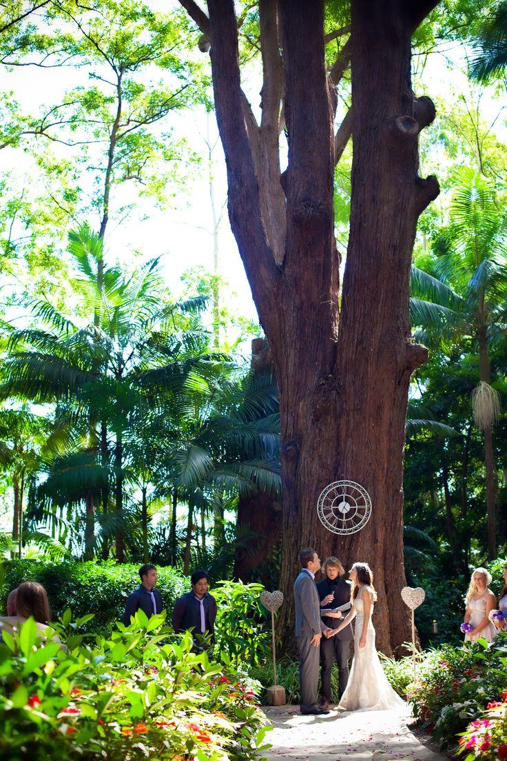 Enchanting rainforest