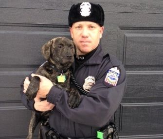 An Ohio police officer saves the same puppy for a second time, Washington Capitals players pose with dogs in a calendar to raise money for an animal rescue, animal charities look for contributions on GivingTuesday and more animal news.