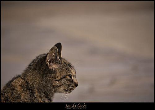 Minino de perfil - Pussycat profile