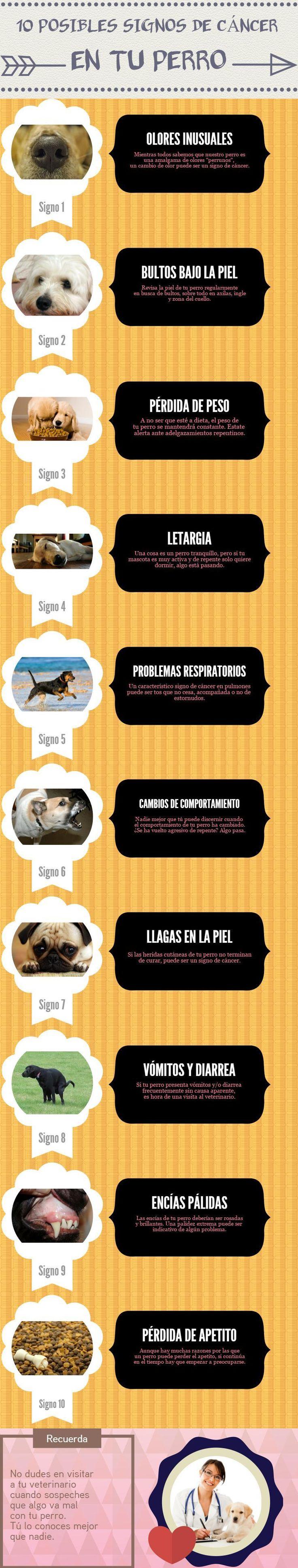 Descubre los signos que podrían ser indicativos de cáncer en tu perro.