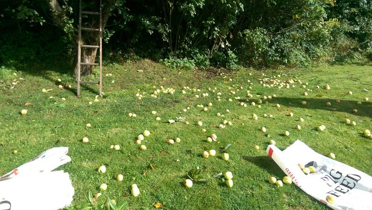 Happiness is a pig keeper who knows someone with too many apples!