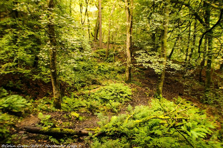 https://flic.kr/s/aHskYvo37X | Hardcastle Crags, West Yorkshire | View my Blog at, www.colingreenphotography.blogspot.co.uk