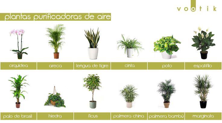 17 mejores im genes sobre vida verde en pinterest salud - Plantas de interior que purifican el aire ...
