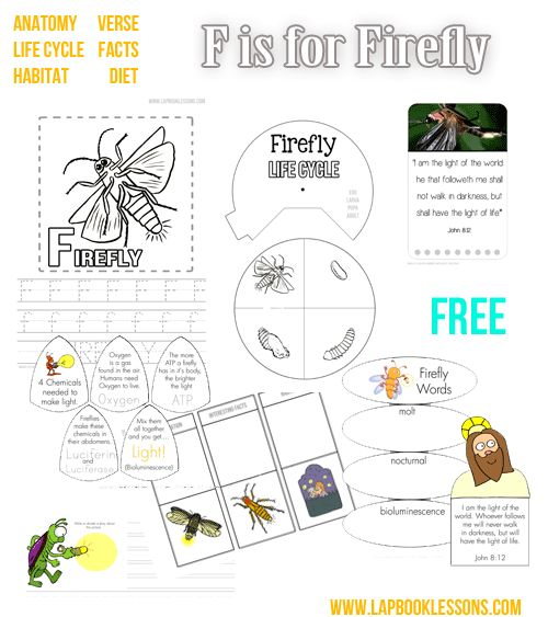 Firefly. Lapbook printables, crafts, info.