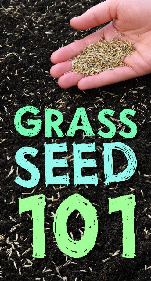 Click Here To Learn All You Need Know About Gr Seed