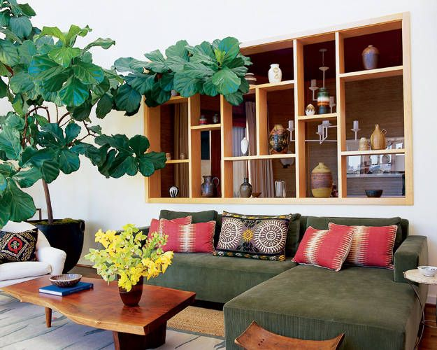 so crazy about these ficus trees!