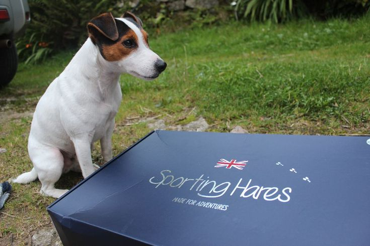 """""""Abi.. you have post!"""" That one sentence is music to my ears. With it being 'that' time of the year again (rain, rain and more rain). My day (and my feet) was brightened up by the arrival of Sporting Hares Ascot Wellington Boots. Rolo was pretty excited to see what was inside the box too. Pictured are Sporting Hares Ascot Wellingtons in Electric Blue. The Ascot boots come in four different colours; Nautical Blue, Electric Blue, Cherry Red and Apple Green. The boots feature, handmade soft…"""