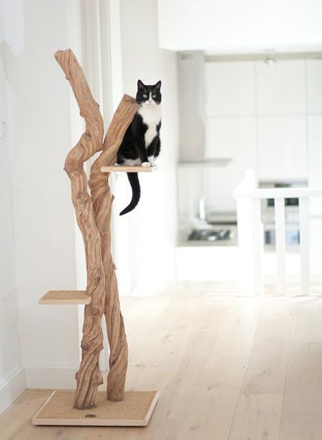 om vi har en katt eller två (eller tre) så ska vi ha en sån här
