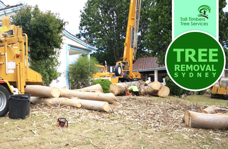 If you have tree removal problems that need an immediate solution, Tall Timbers Tree Services is just a call away!