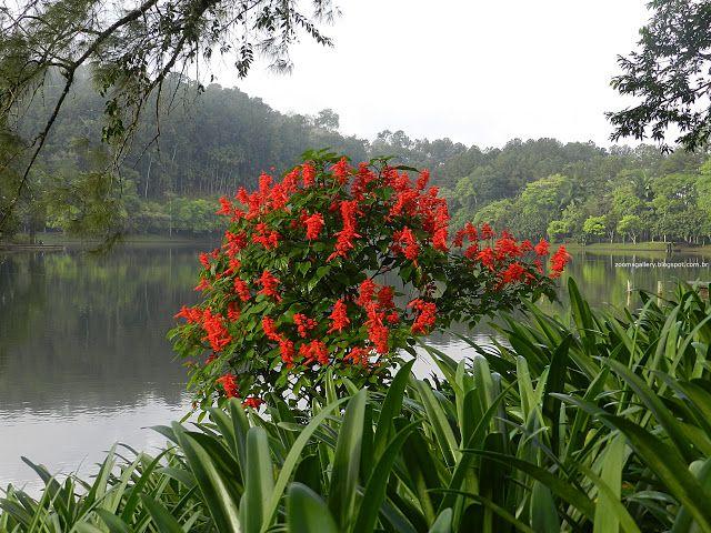 Zoom Gallery: Flores Vermelhas