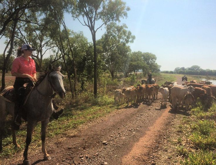 @anikafit loving mustering this morning in 43 degrees heat with 100% humidity. Lucky she was wearing our new Australian made shirt to get her through the day. #ringerswestern #australiancowgirls #jillaroo #australianmade #supportlocal  http://ift.tt/1VSP58U