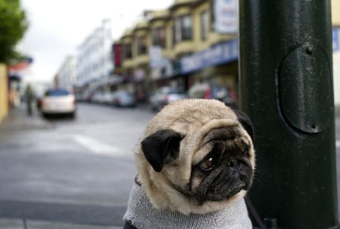 20 Sad Puppies That Will Ruin Your Day – BoredBug – cure your boredom