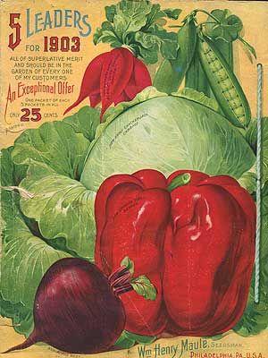 Heirloom seeds  // Great Gardens & Ideas //