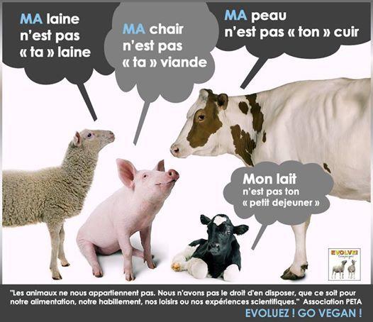 www.vegan-france.fr images images_vegan horreur animaux_0003.jpg