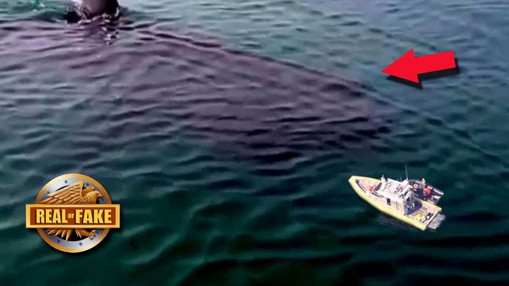 90 FT MEGALODON CAUGHT ON TAPE - real or fake? | Shark called Submaire .. And the real Megalodon ...