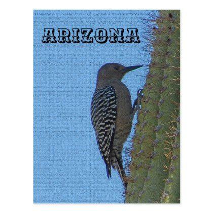 Animals of Arizona Gila Woodpecker on Tall Cactus Postcard - animal gift ideas animals and pets diy customize