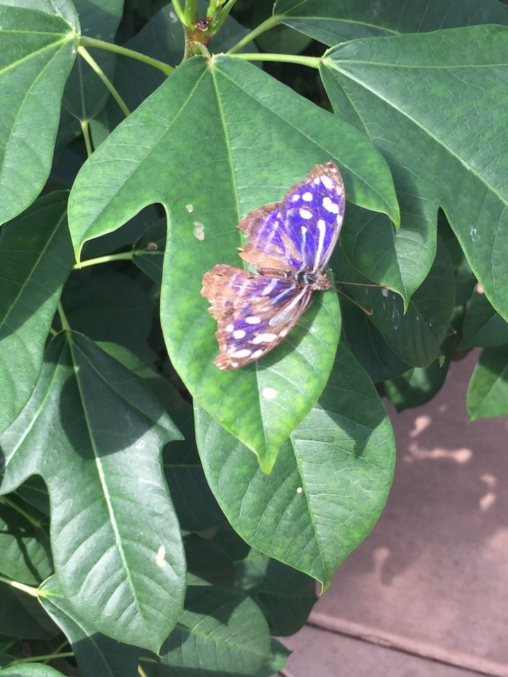 Learn more from Motherhood & Merlot on Butterfly Wonderland Scottsdale, AZ. Tips, thoughts, and resources for mothers and women.