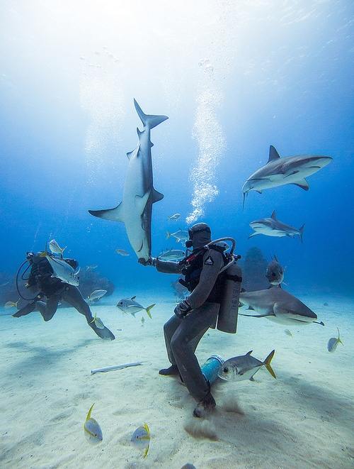 Diving with reef sharks - Photo by Graham Gibson, 2013.
