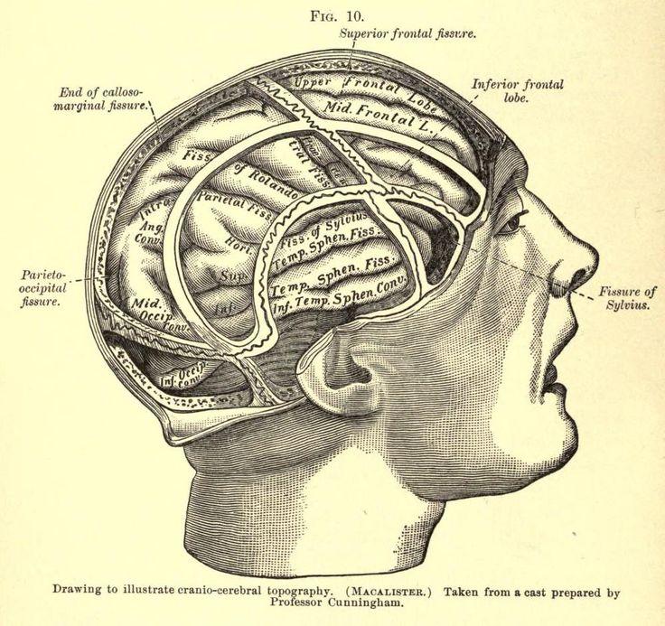 Cranio-Cerebral Topography | Brain Illustrations ...