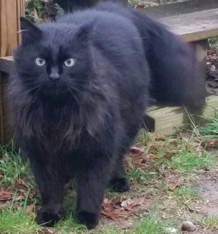 Found Cat - Unknown  - East Lyme, CT, USA 06333 on April 29, 2017 (16:00 PM)