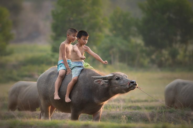 drive buffalo by Visoot Uthairam on 500px
