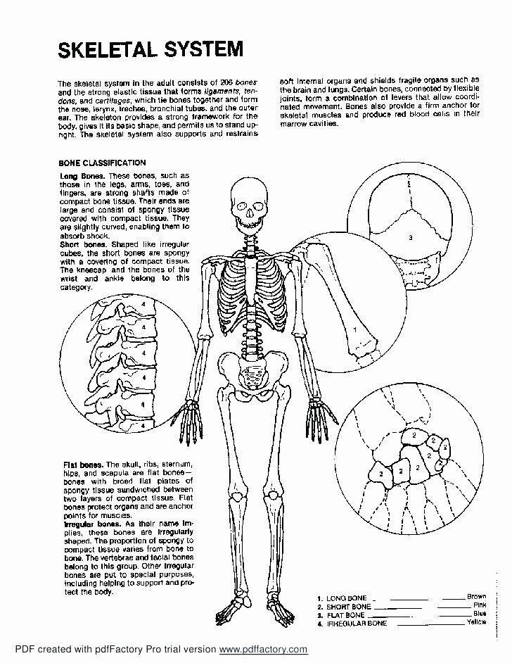 Anatomy Of A Bone Coloring Unique Human Bone Coloring Pages At Getdrawings Buku Mewarnai