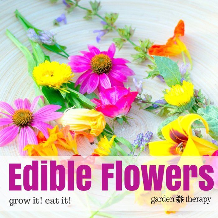 The Ten Best Edible Flowers To Grow In Your Garden Edible Flowers Edible Flower Garden Edible Flowers Recipes