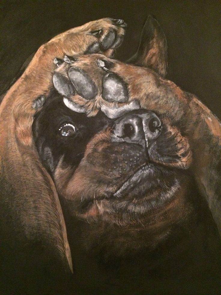 Rottweiler Facebook: Chinara's Hobby Craft (acrylic ...