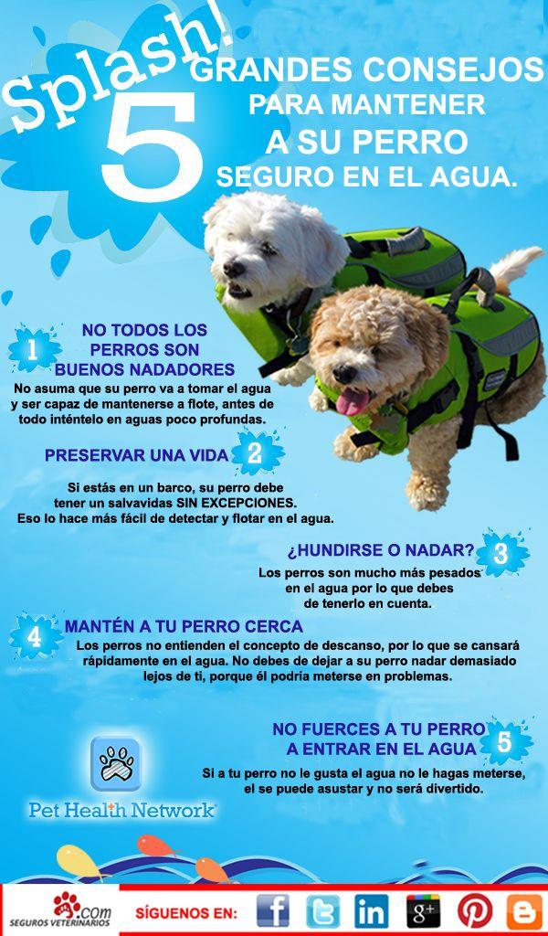En época de verano debemos de tener cuidad con nuestro #perro en el agua.   Para que no ocurra ningún percance, os facilitamos 5 consejos para mantener a tu perro seguro.