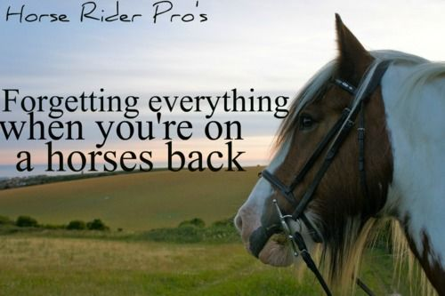 The Gypsy S Got Quotes: 254 Best Horse Back Riding Quotes Images On Pinterest