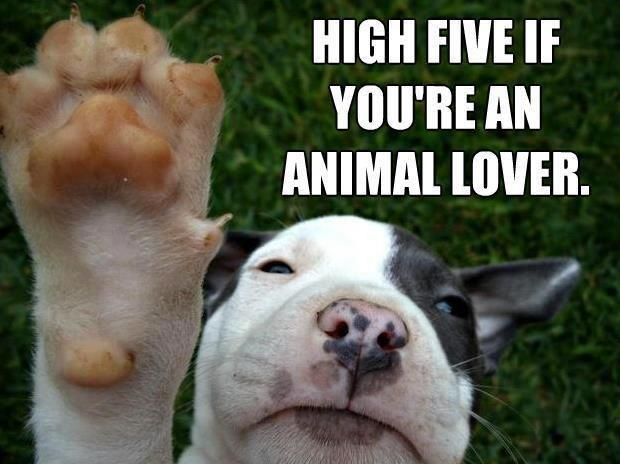 High Five To People Who Loves Animals! http://www.bterrier.com/high-five-if-you-are-an-animal-lover/