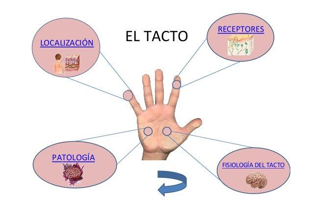 Resultados De La Busqueda De Imagenes Imagenes De Los Sentidos Del Tacto Yahoo Search Sentido Del Tacto Arte Dental El Tacto