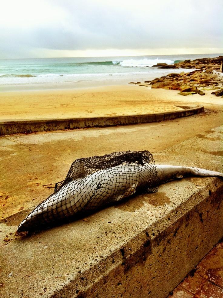 http://www.travelhabit.dk/wp-content/uploads/2012/07/Sydney-snapshots-Travel-Habit-56.jpg