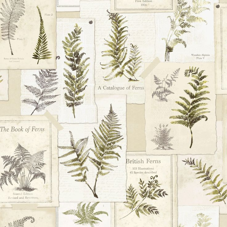 Fern Leaves Floral Motif Wallpaper | Departments | DIY at B&Q