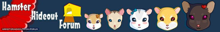 Have you heard of the Hamster Hideout forum? If you haven't, the Hamster Hideout is a forum for hamster owners and lovers all around the world to ask questions, or just to simply get together with other hamster lovers!